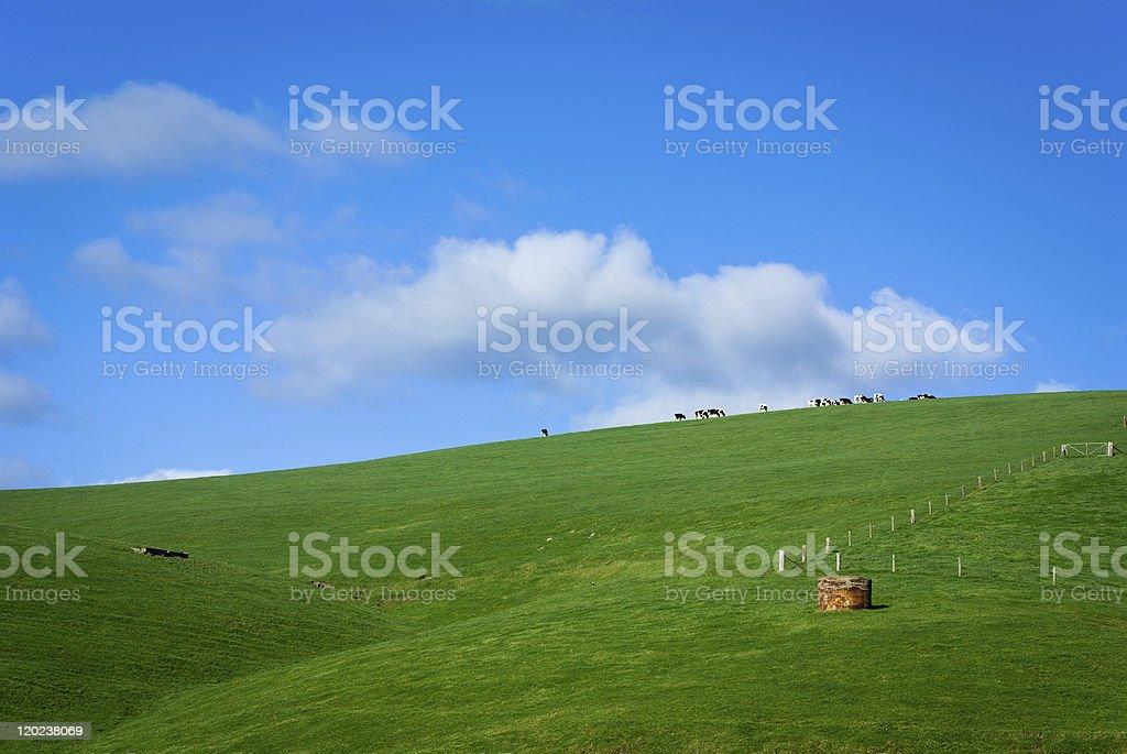 Green farmland stock photo