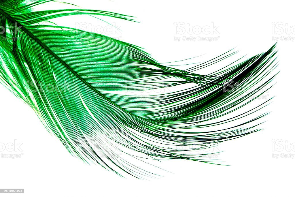 Green Feather stock photo