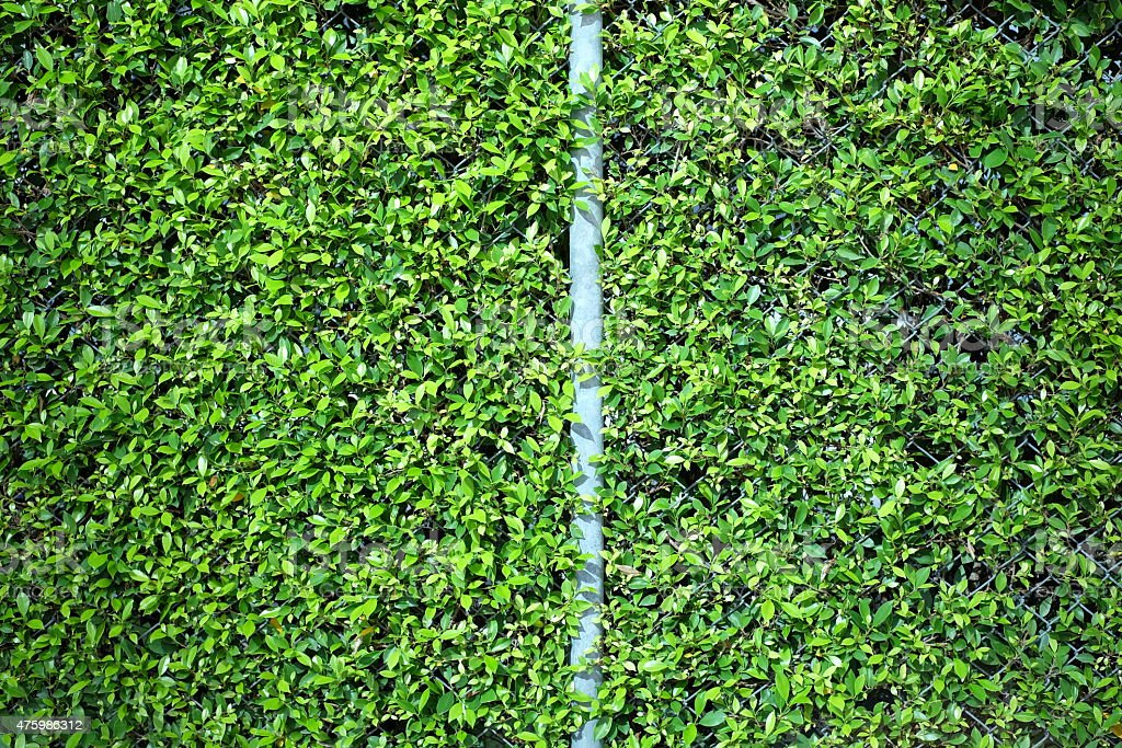 Green fence plant background royalty-free stock photo