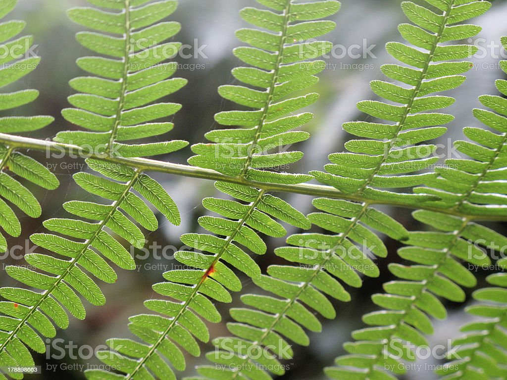 green fern branches royalty-free stock photo