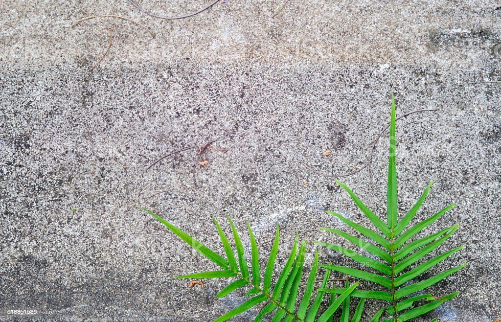 Green fern grows out from a  wall stock photo