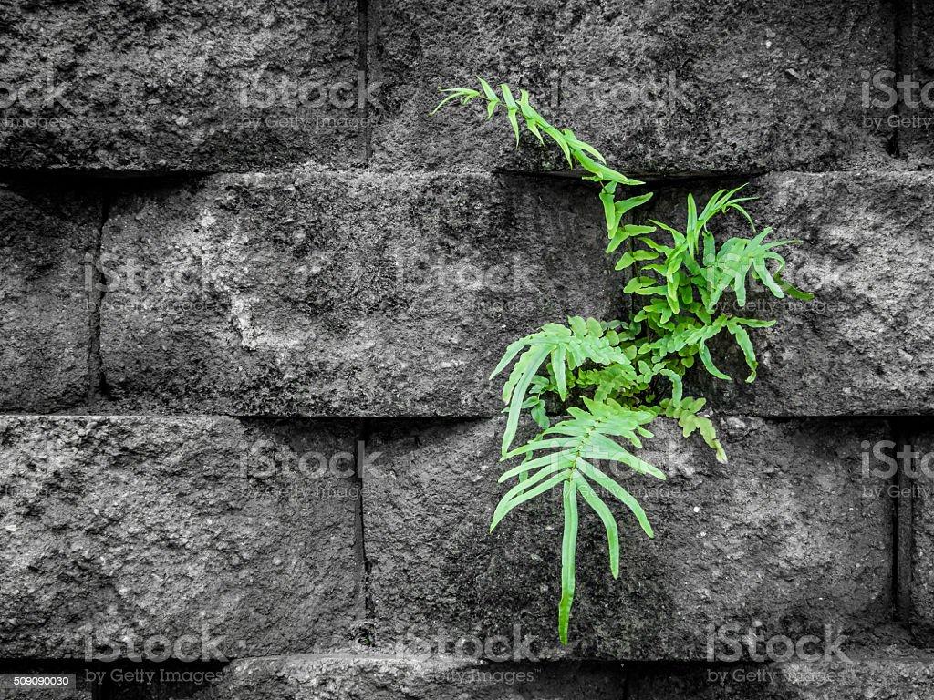 Green Fern in Granite Wall stock photo
