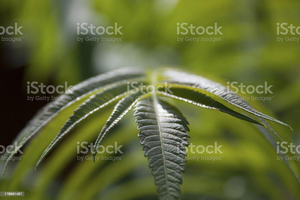 Green Fern Leaf royalty-free stock photo