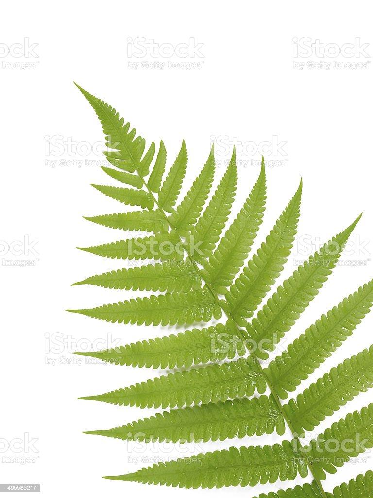 green fern leaf stock photo