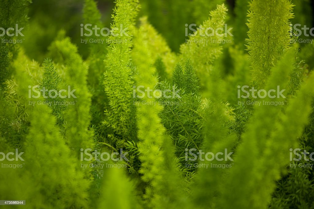 Green Fern Plant Close Up stock photo