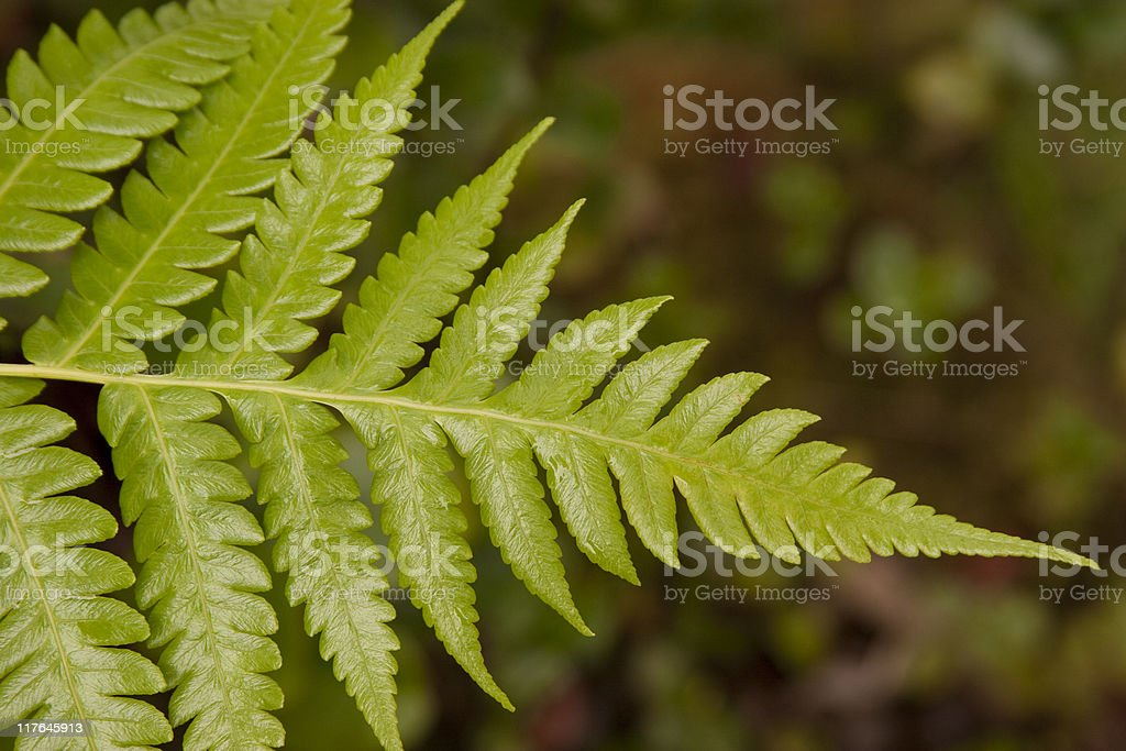 Green Fern, Plant, Shallow Depth Of Field, Tropical, Rainforest, Nature stock photo