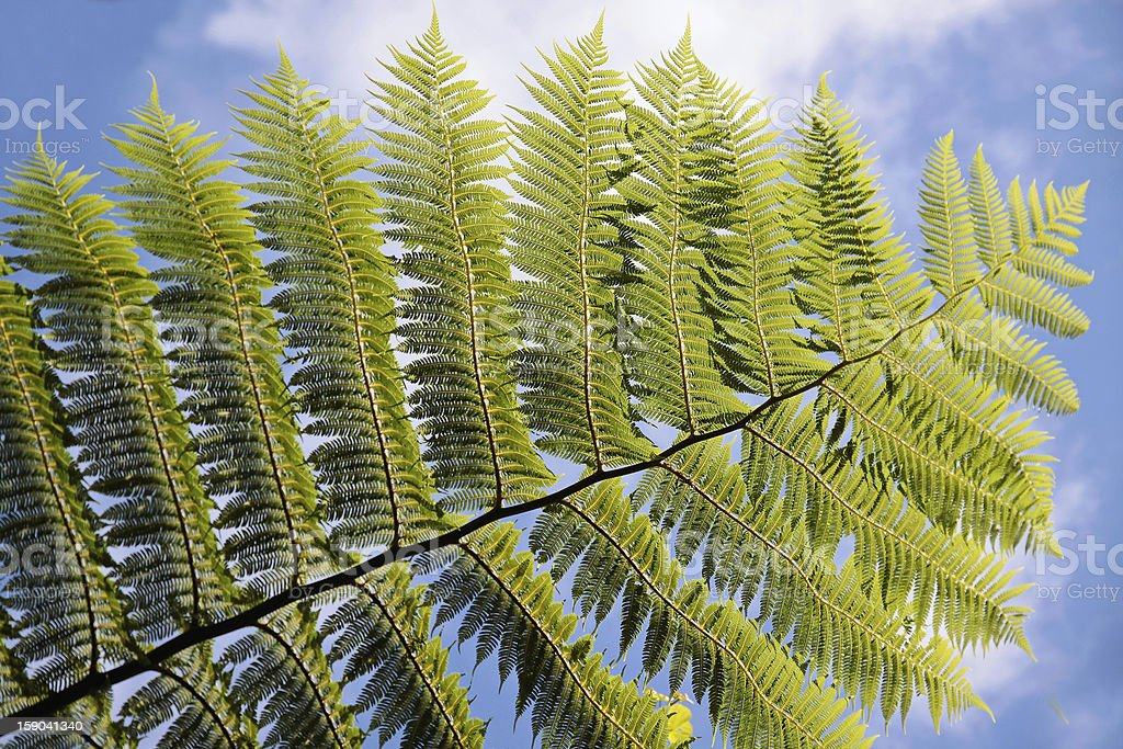 Green fern with blue sky stock photo