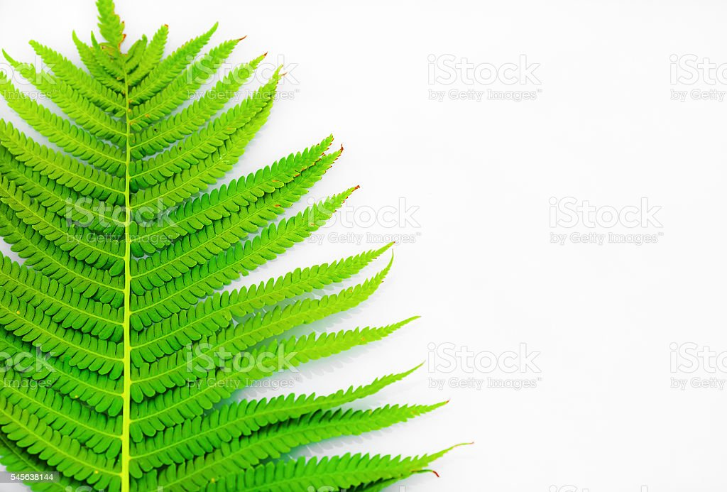 Green fern with copy space stock photo