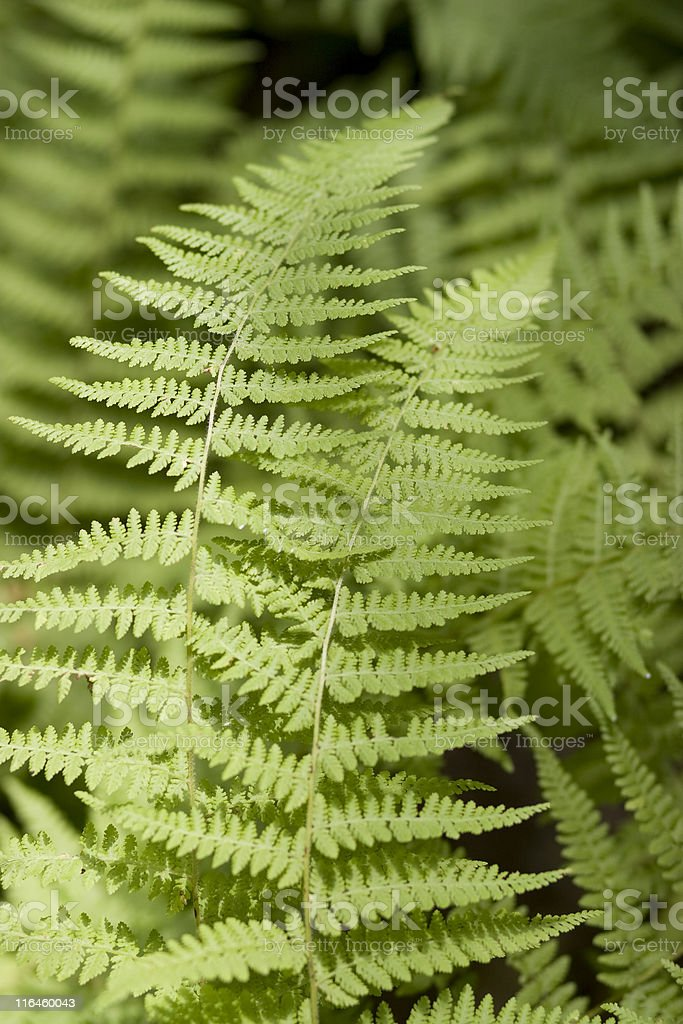 green ferns on a black background stock photo