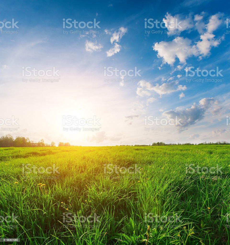 green field and beautiful sunset stock photo