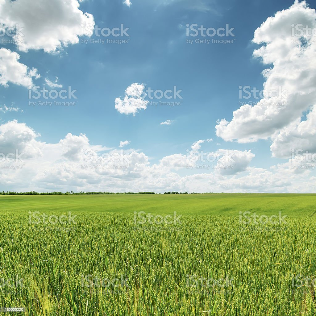 green field and blue cloudy sky royalty-free stock photo