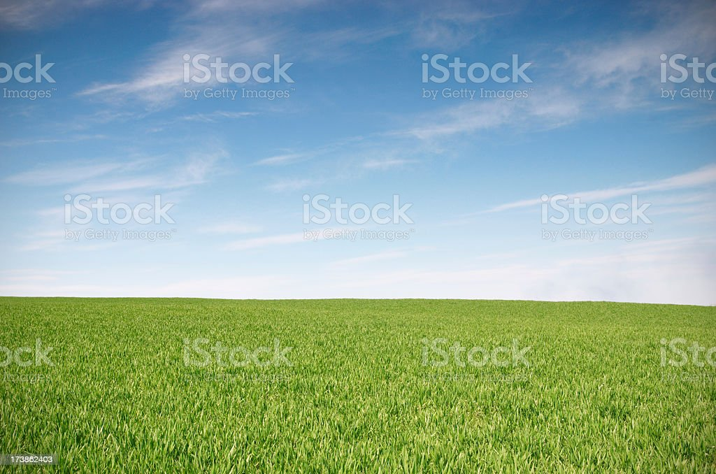 Green field and blue skies landscape stock photo