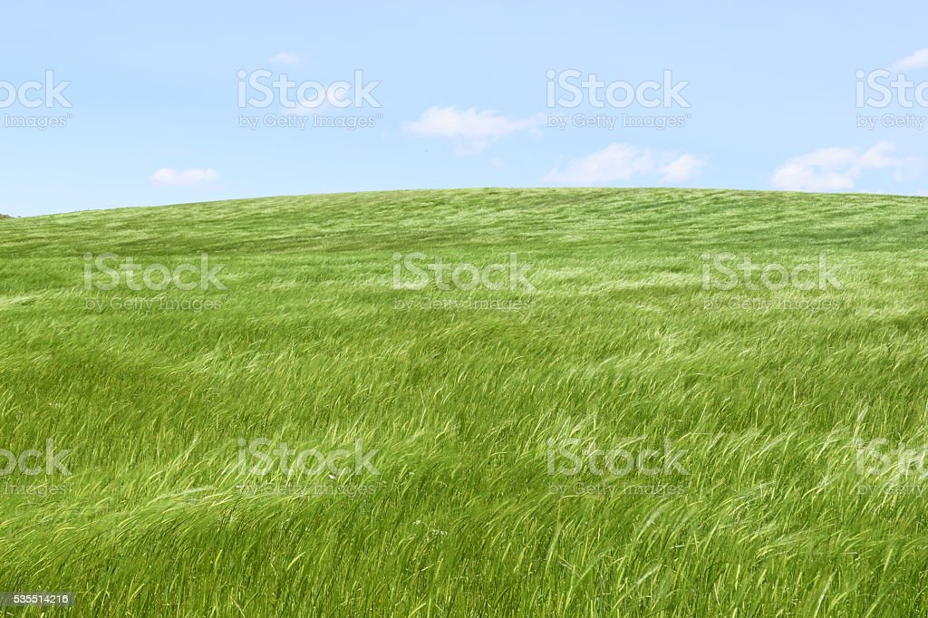 green field and blue sky  and light stock photo