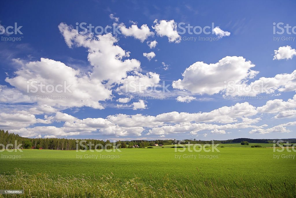 Green field and blue sky in countryside royalty-free stock photo