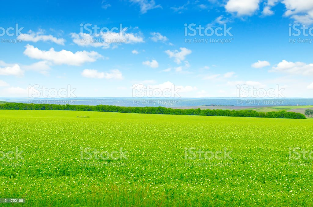 green field and blue sky with stock photo