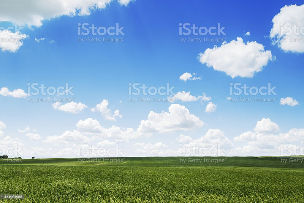 Green field and cloudy sky royalty-free stock photo