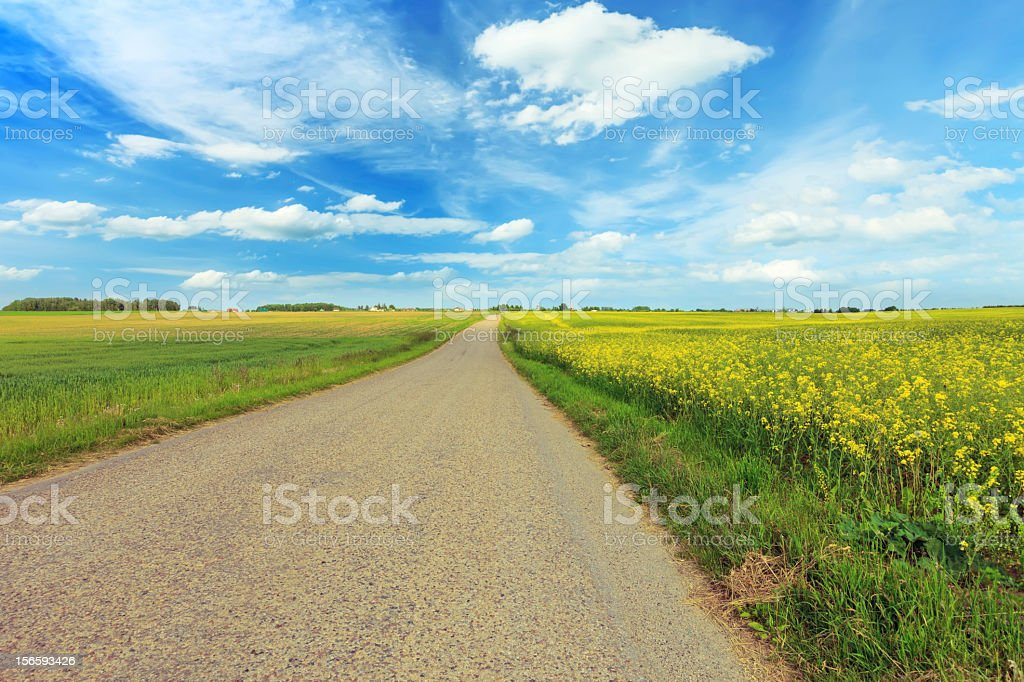 Green field and countryside road royalty-free stock photo