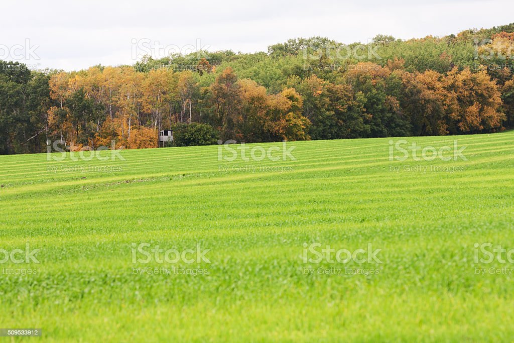 Green Field and Forest with Hunting Shack in Autumn stock photo