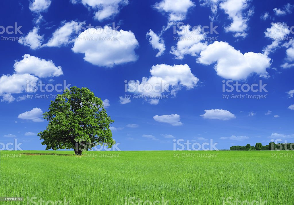 Green field and lonely tree - Landscape stock photo