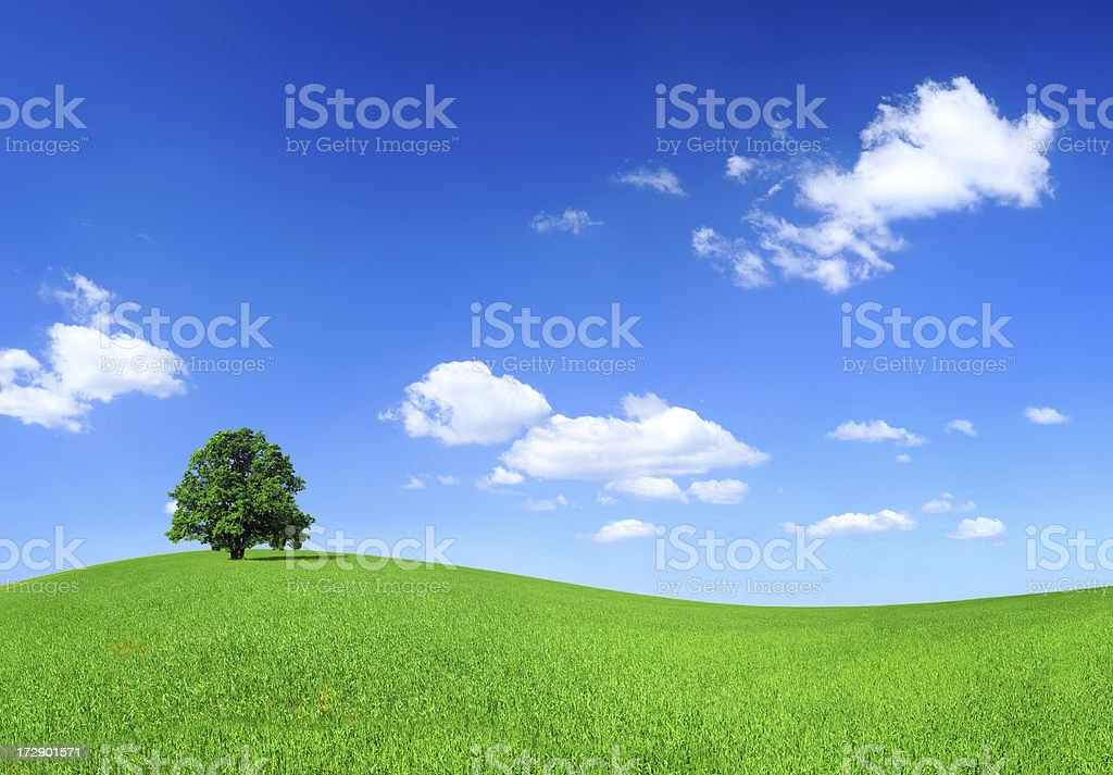 Green field and lonely tree - Landscape royalty-free stock photo