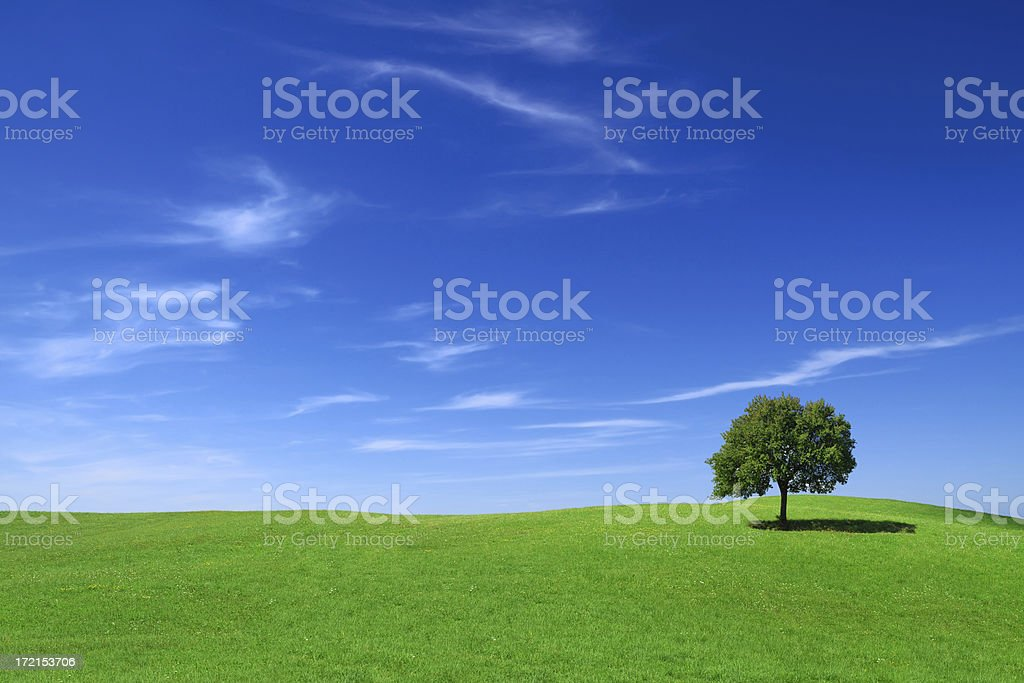 Green field and lonely tree stock photo