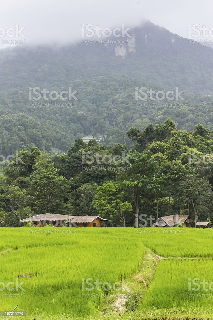 Green Field And Mountain in Doi inthanon royalty-free stock photo
