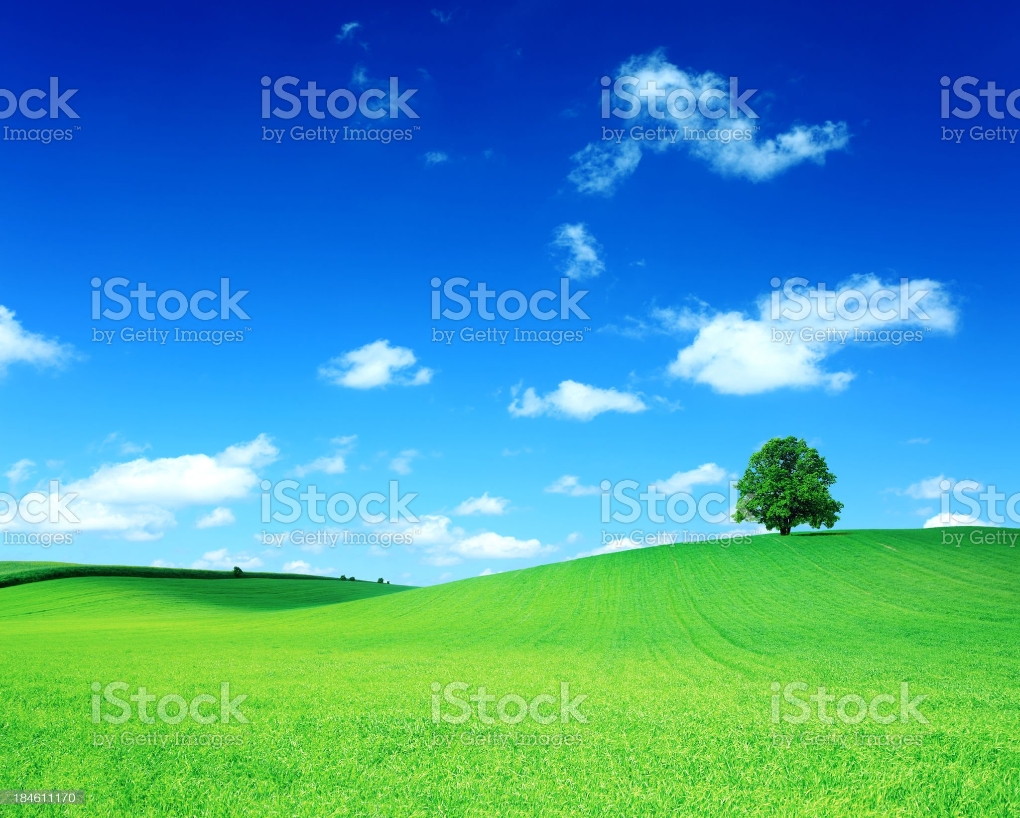 Green Field and the Tree on Hill - Rolling Landscape royalty-free stock photo