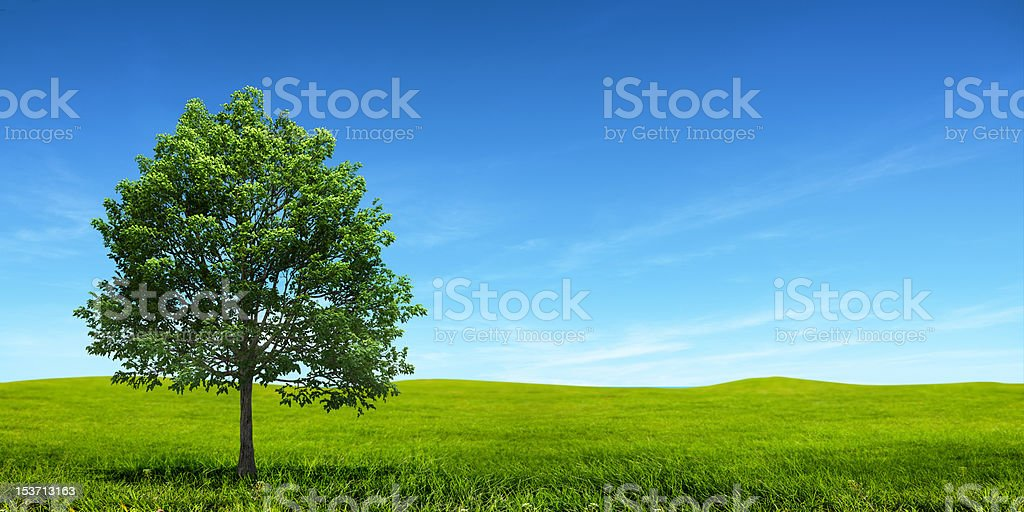 Green field and tree in front of a blue sky stock photo