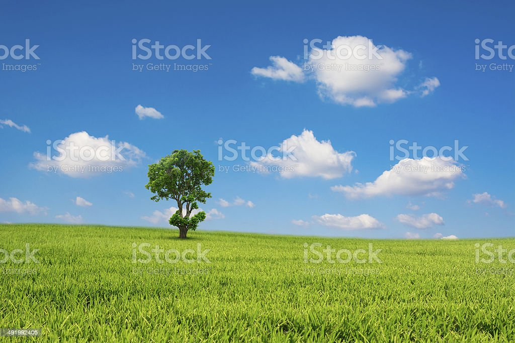 Green field and tree with blue sky cloud royalty-free stock photo