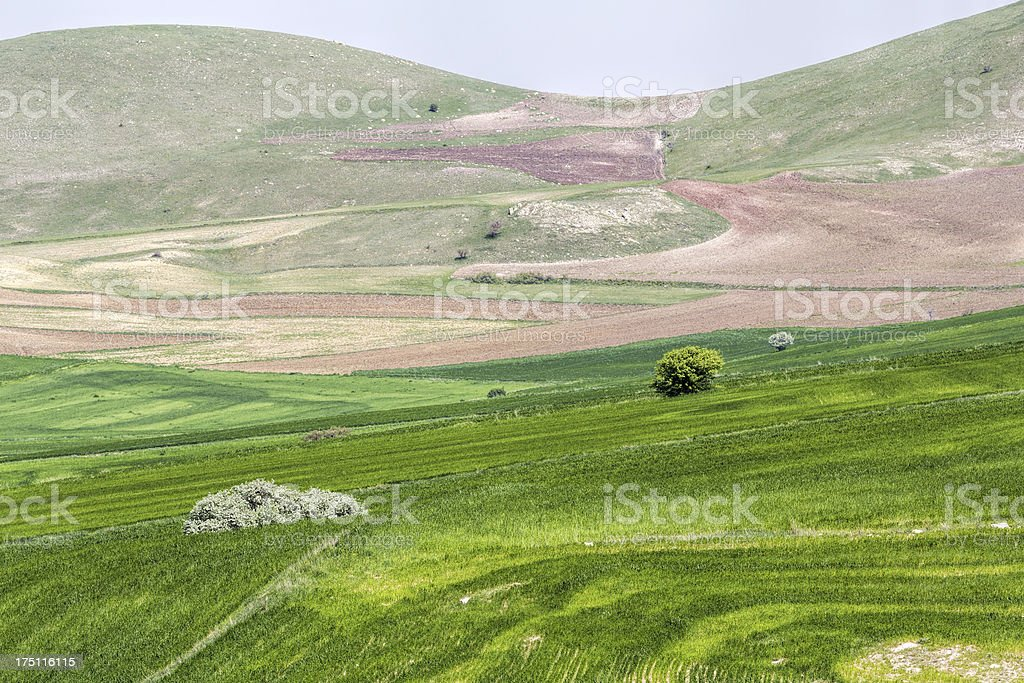 Green Field and unplowed area royalty-free stock photo