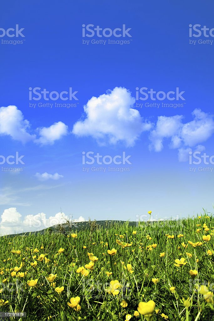 Green Field and yellow flowers tree royalty-free stock photo