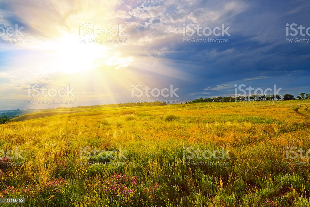 Green field at sunset stock photo