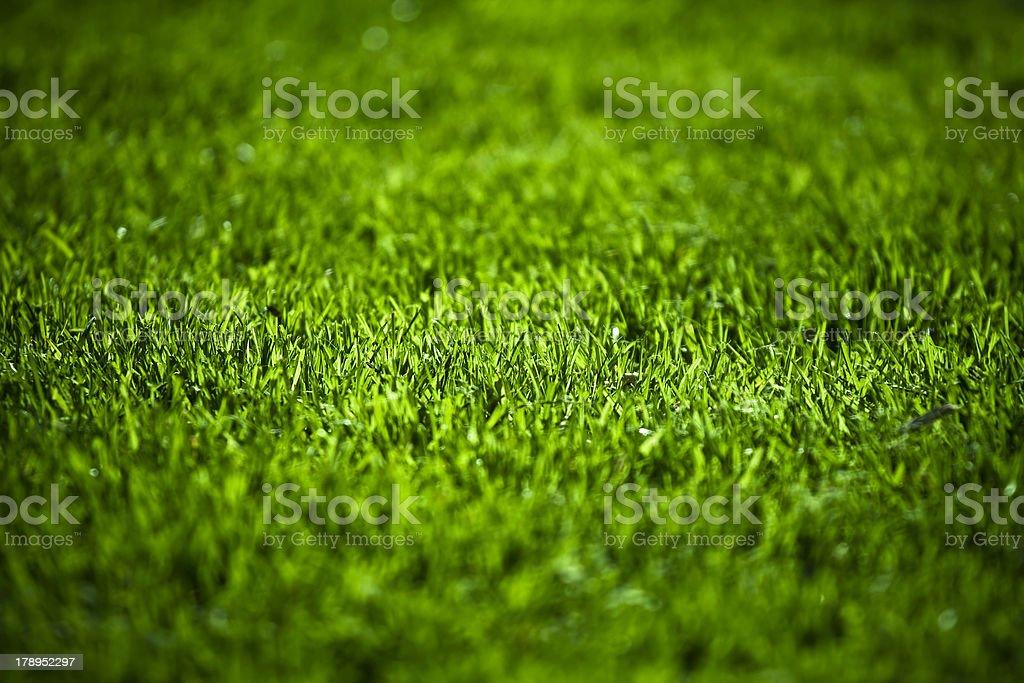 Green field background stock photo