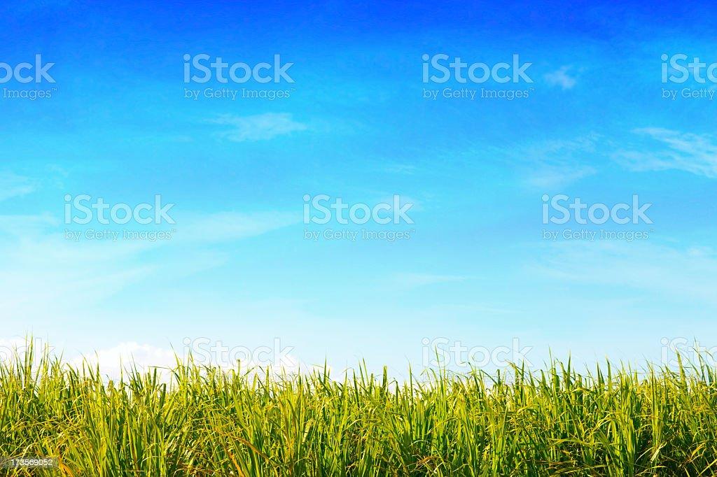 Green Field & Blue Sky stock photo
