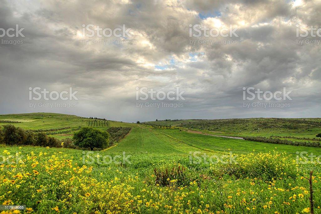 Green field - Dark clouds stock photo