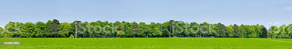 Green field forest background stock photo