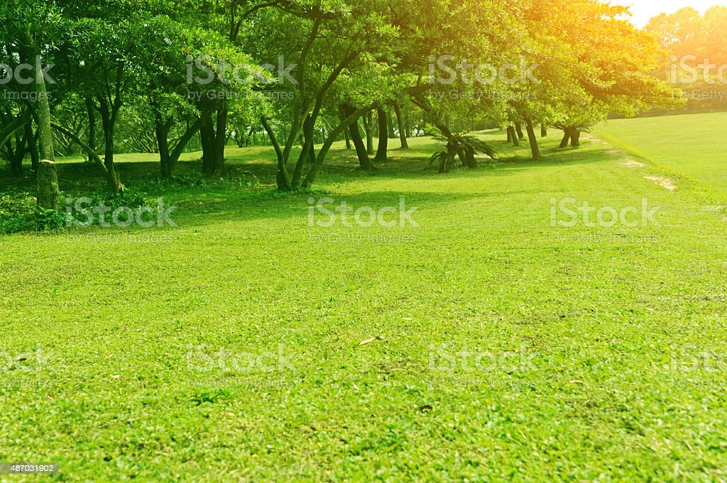 Green field in the park stock photo