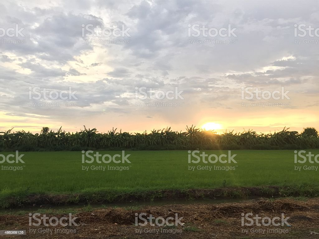 Green field in the sunset stock photo