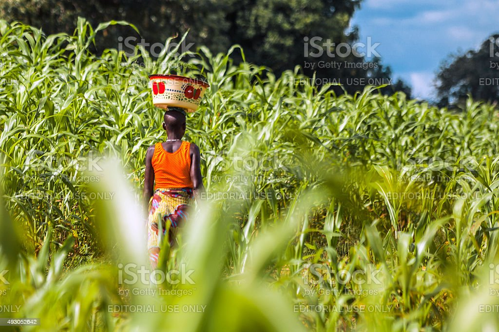 Green field in West Africa. stock photo