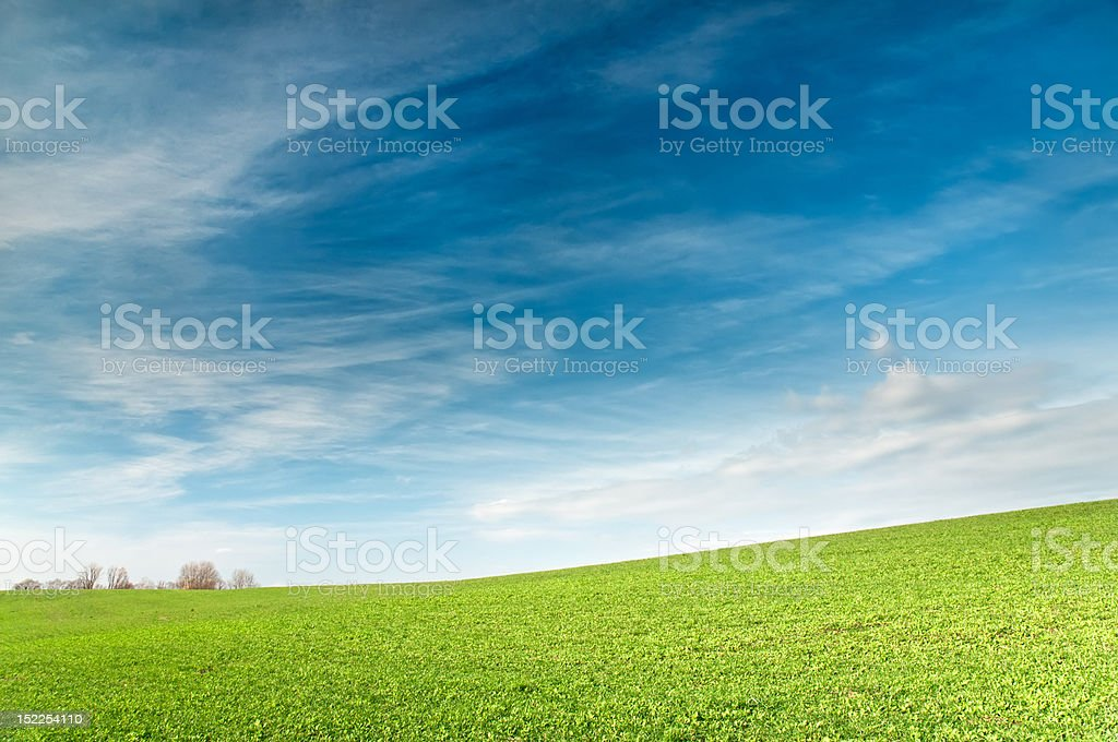 Green field is under blue sky stock photo