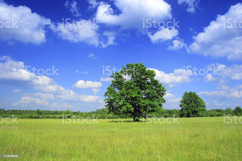 Green field - Landscape lonely tree royalty-free stock photo