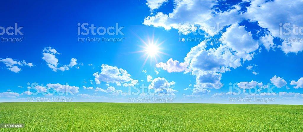 Green field - Landscape royalty-free stock photo