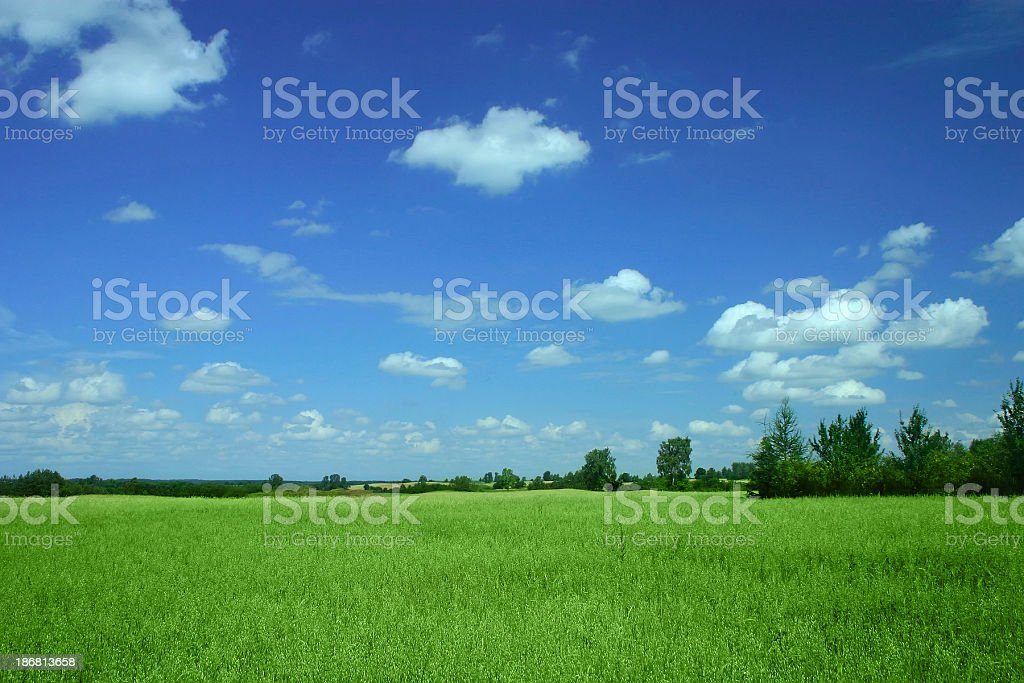 Green field - Landscape stock photo