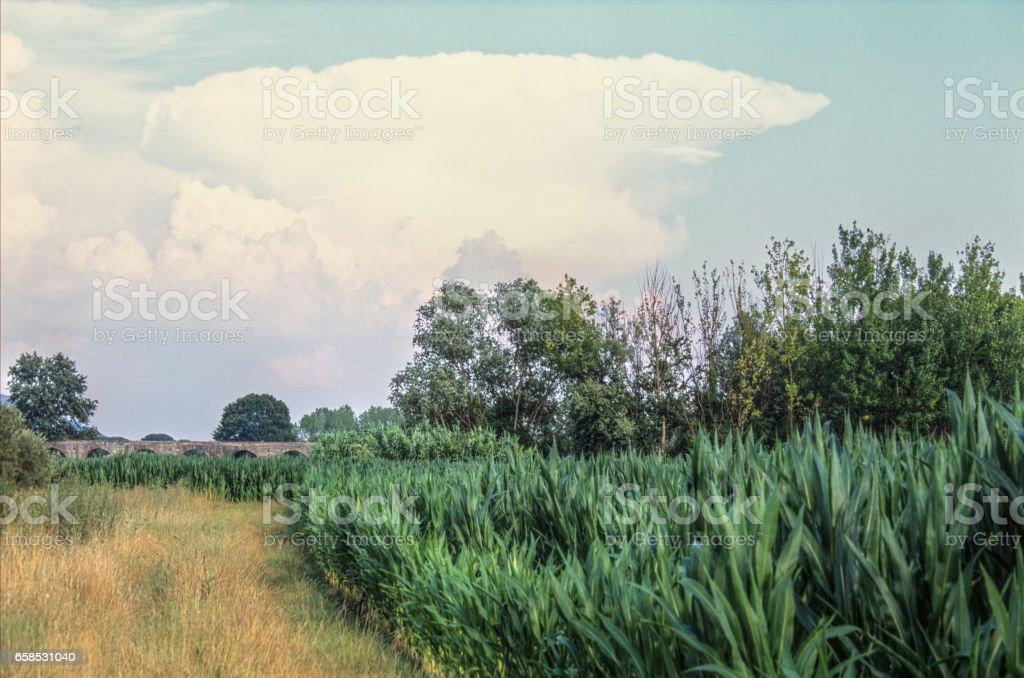 Green field, large cloud stock photo