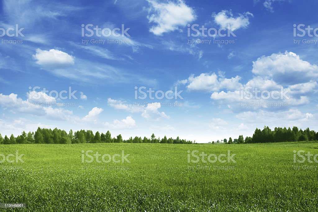 Green field lined by trees on clear day stock photo