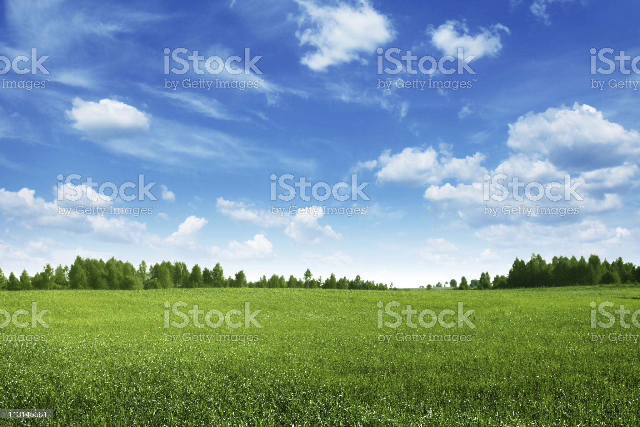 Green field lined by trees on clear day royalty-free stock photo