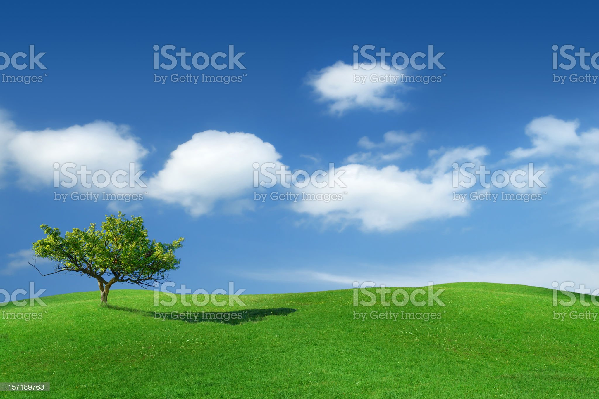 Green field lonely tree royalty-free stock photo