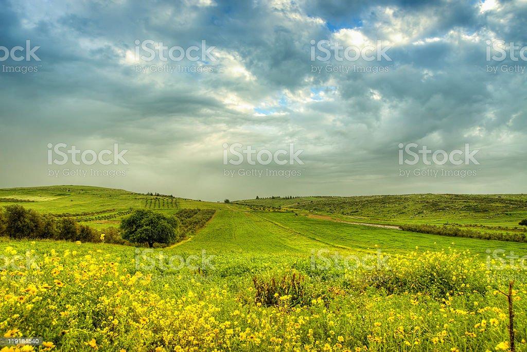 Green field near Nazareth, Israel stock photo