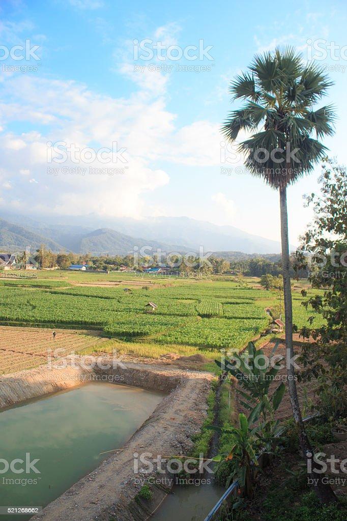 Зеленое поле питомник завод сельского хозяйства Стоковые фото Стоковая фотография