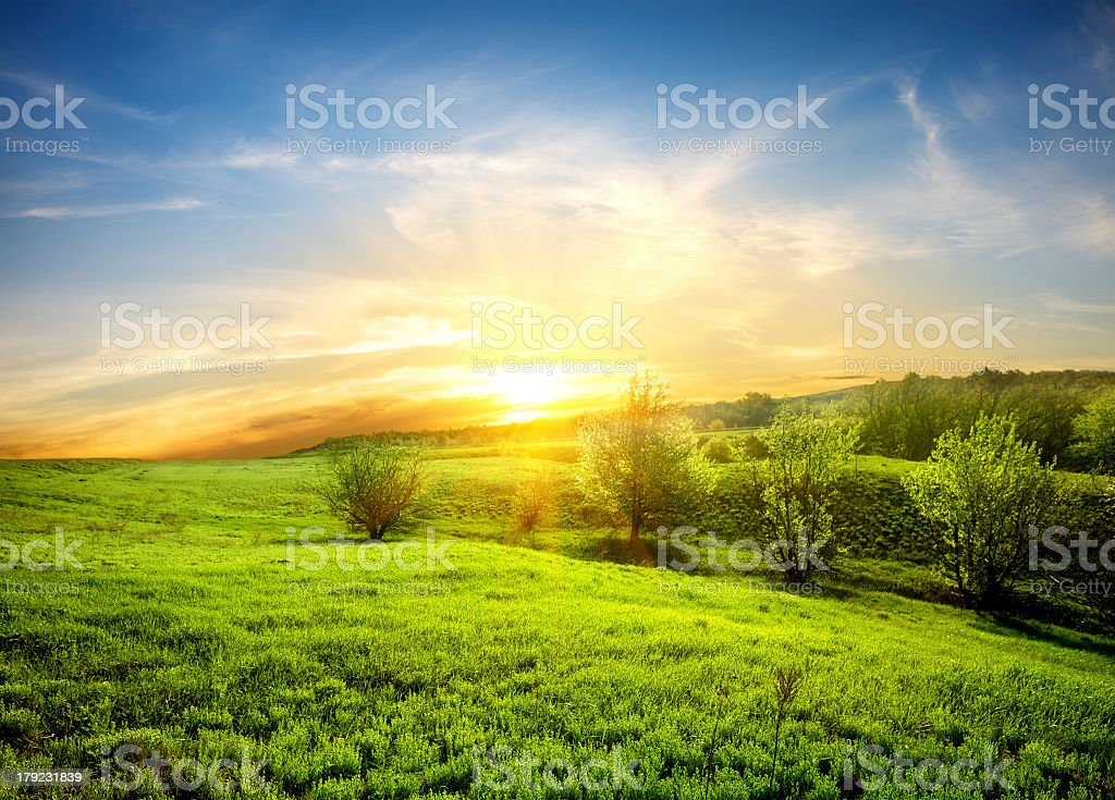 Green field of grass and sunset royalty-free stock photo